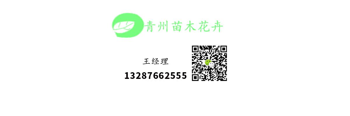 贵州卖菖蒲小苗欢迎咨询服务周到