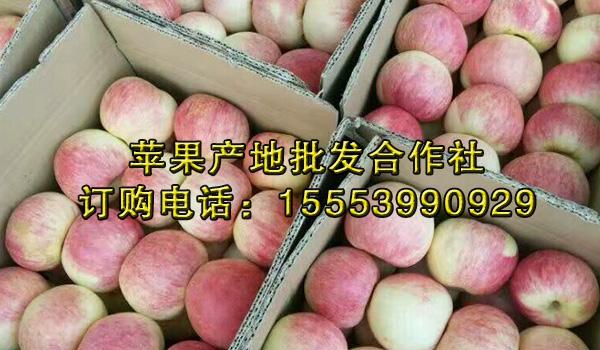 洛川苹果批发走势_栖霞苹果批发行情_山东益农水果