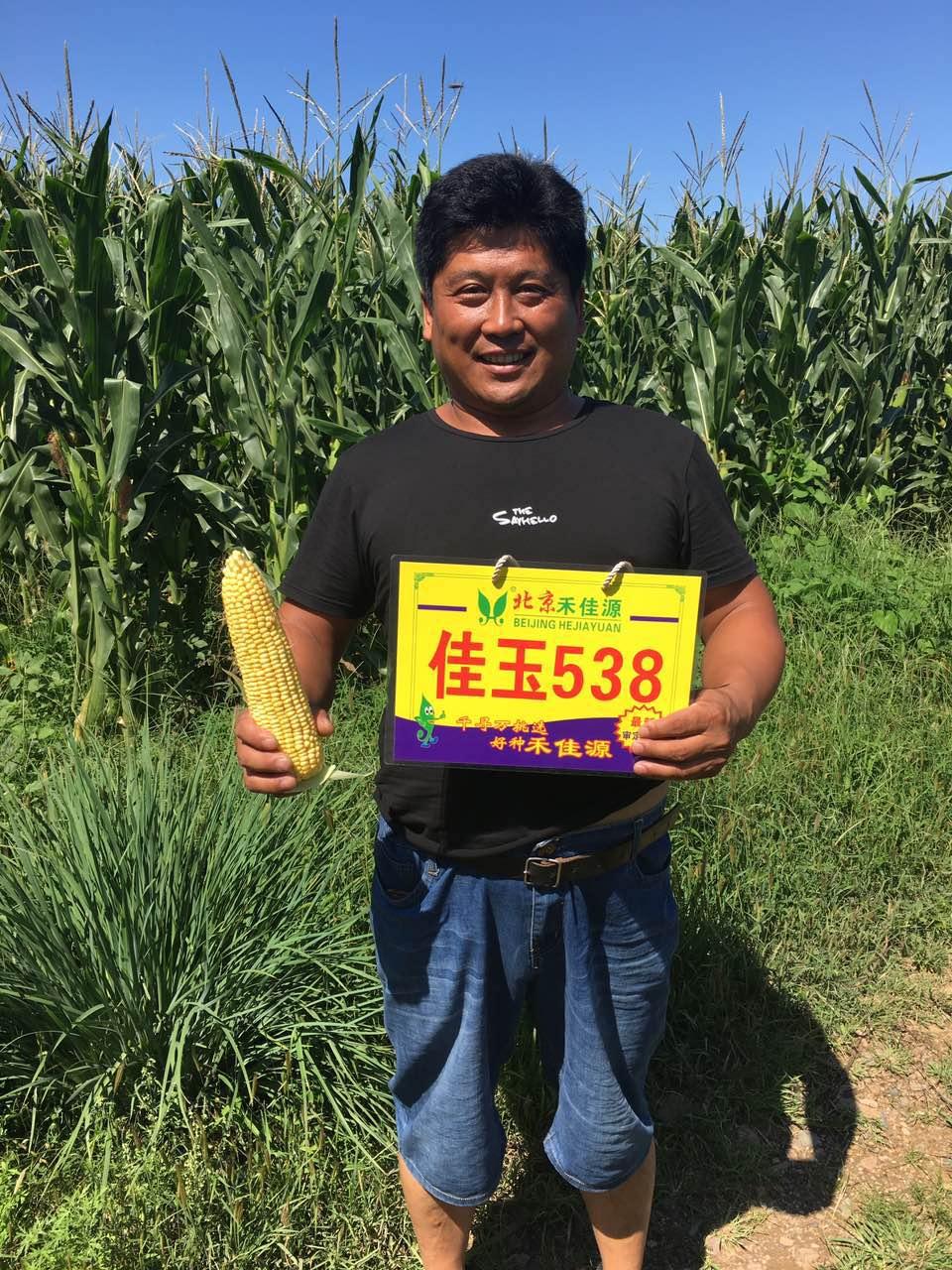 甘肃青贮型玉米种子价格_北京禾佳源