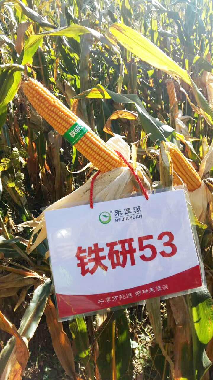 水溶性肥料价格价格_北京禾佳源