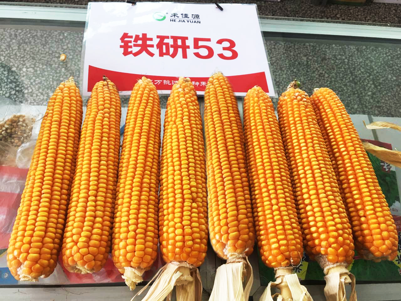 高品质的玉米品种价格_北京禾佳源