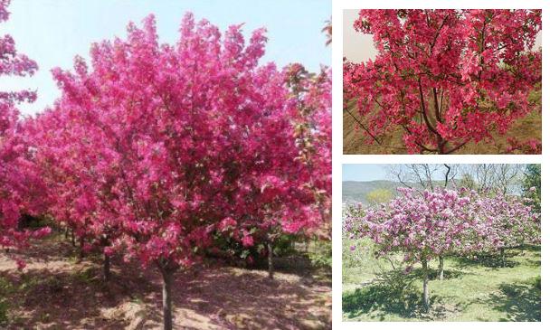 平面树ps素材果树