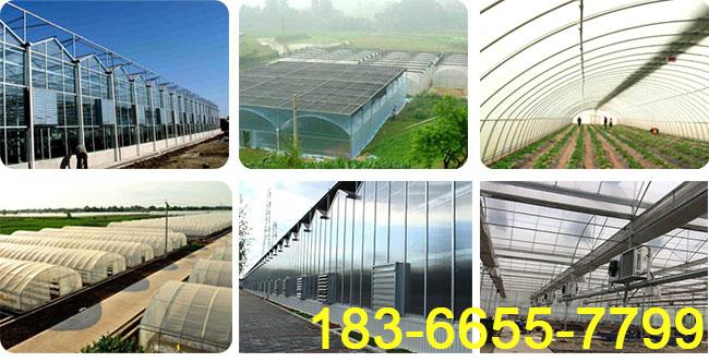 大规模的连栋温室