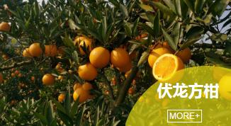 内江自贡柑橘培训