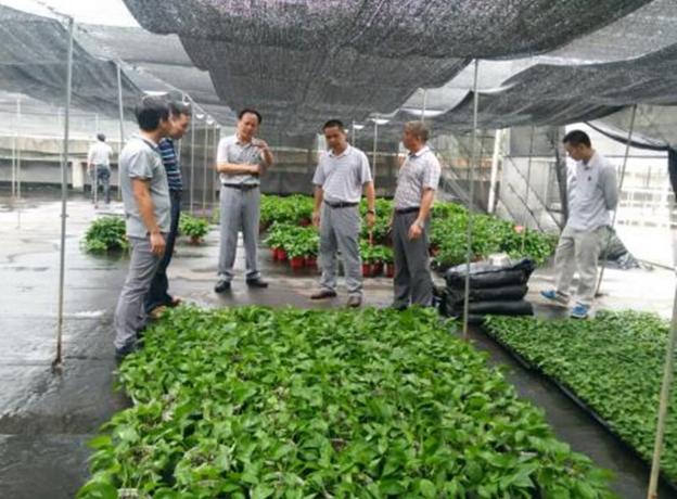 锦州如何办白蚁防治工多长时间可以拿到