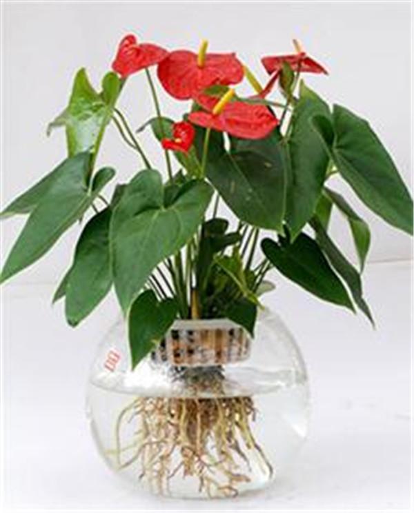 平价的直供办公室花卉租摆新报价